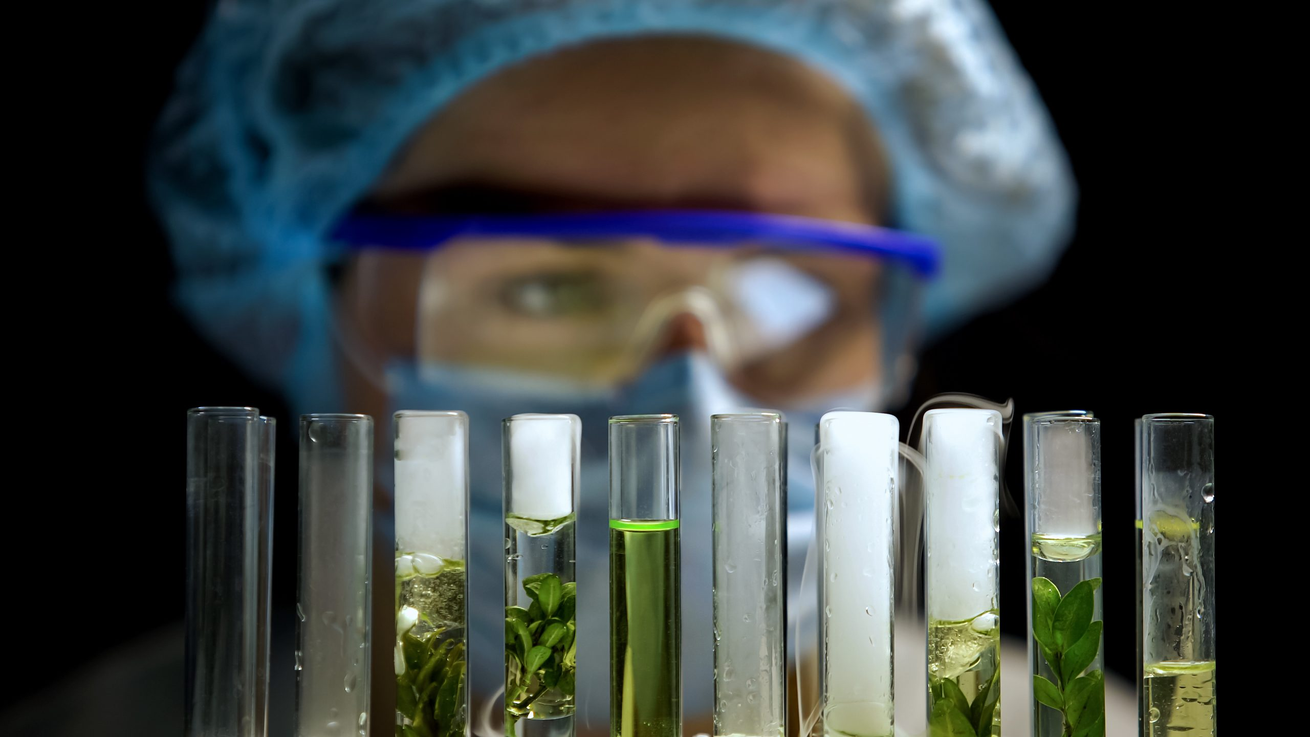 Chemist checking reaction in tubes with plants, alternative fuel development